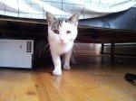 kot pod łóżkiem
